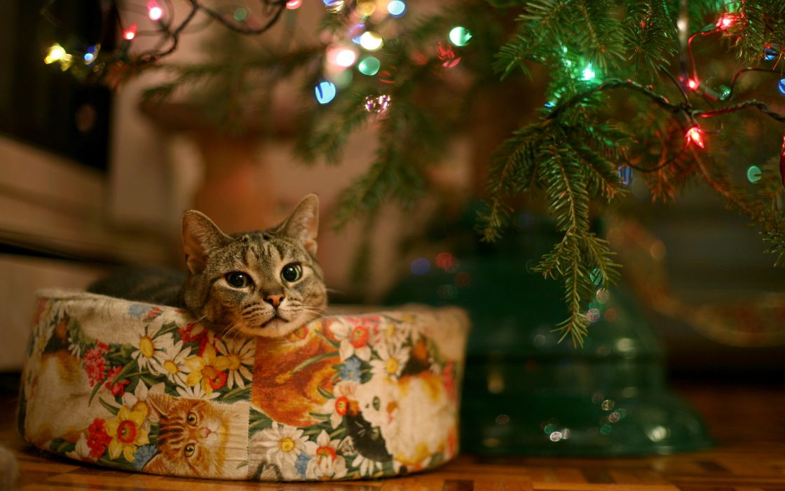 Cats animals christmas christmas trees wallpaper
