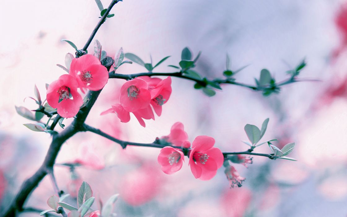 Nature flowers wallpaper