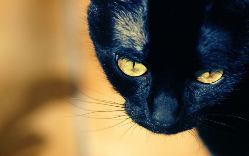Up black cat wallpaper
