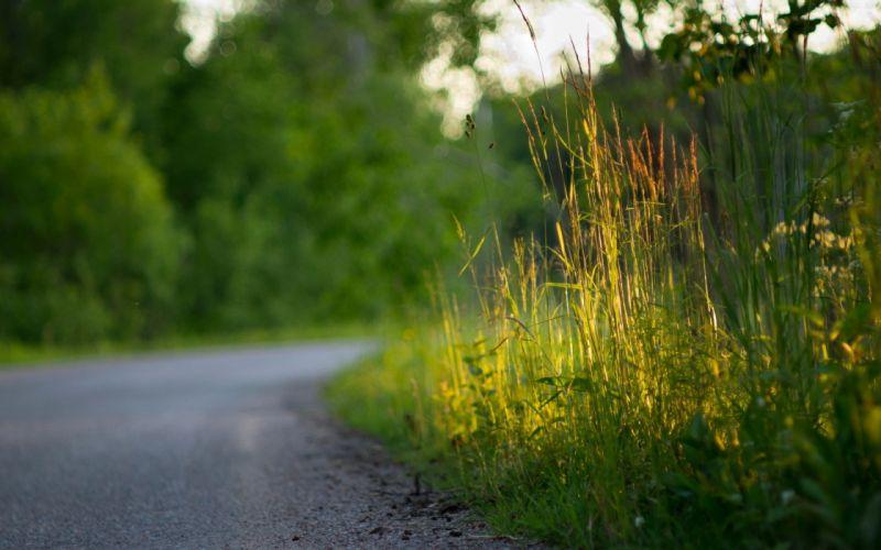 Nature grass roads wallpaper