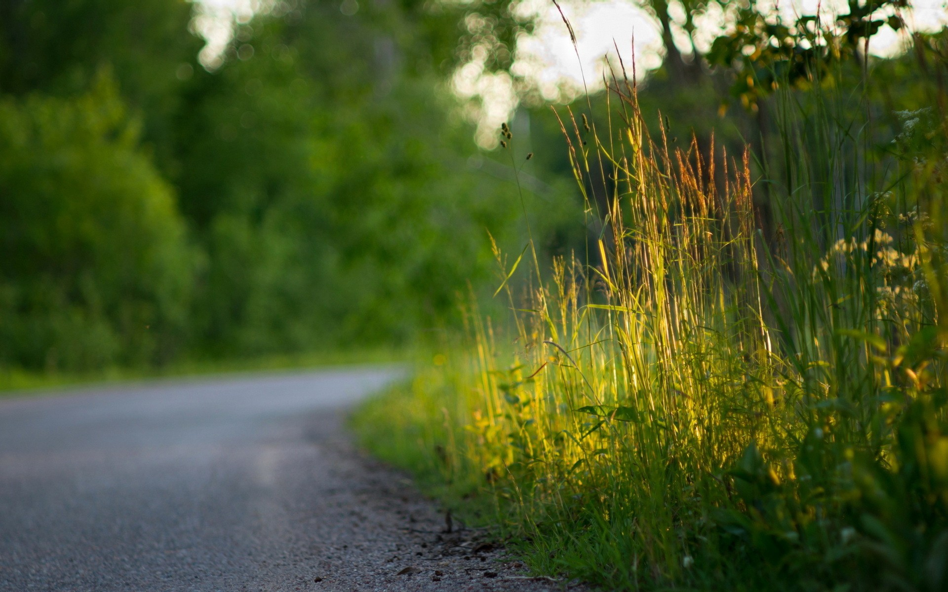 Nature Grass Roads Wallpaper