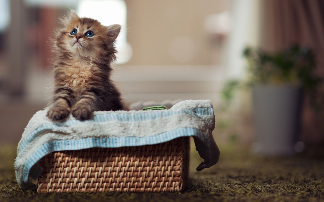 Cats animals baskets wallpaper
