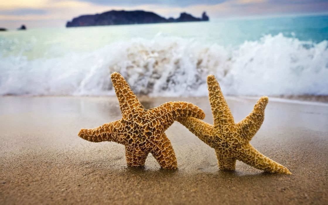 Nature starfish wallpaper