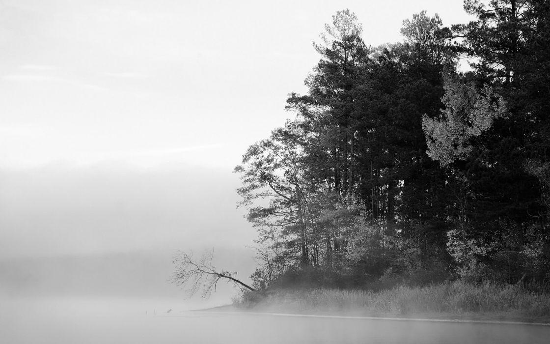 Coast trees wood forest shore fog grayscale monochrome wallpaper