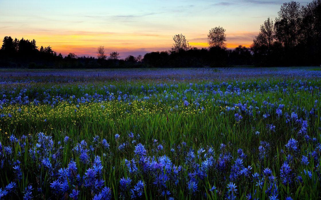 Landscapes flowers blue flowers wallpaper