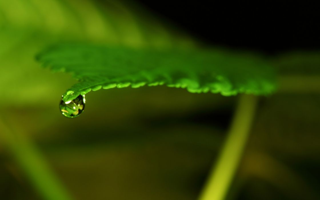 Thinking water drops macro thin lizzy wallpaper
