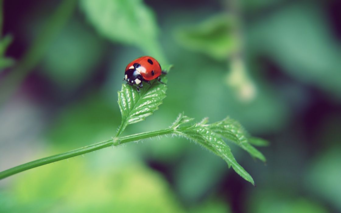 Nature leaf insects summer (season) bugs ladybirds wallpaper