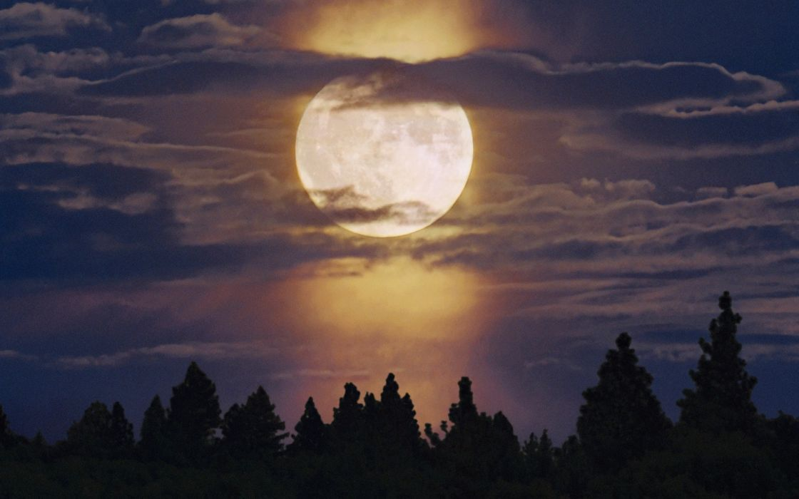 Landscapes trees forest moon moonlight skyscapes wallpaper