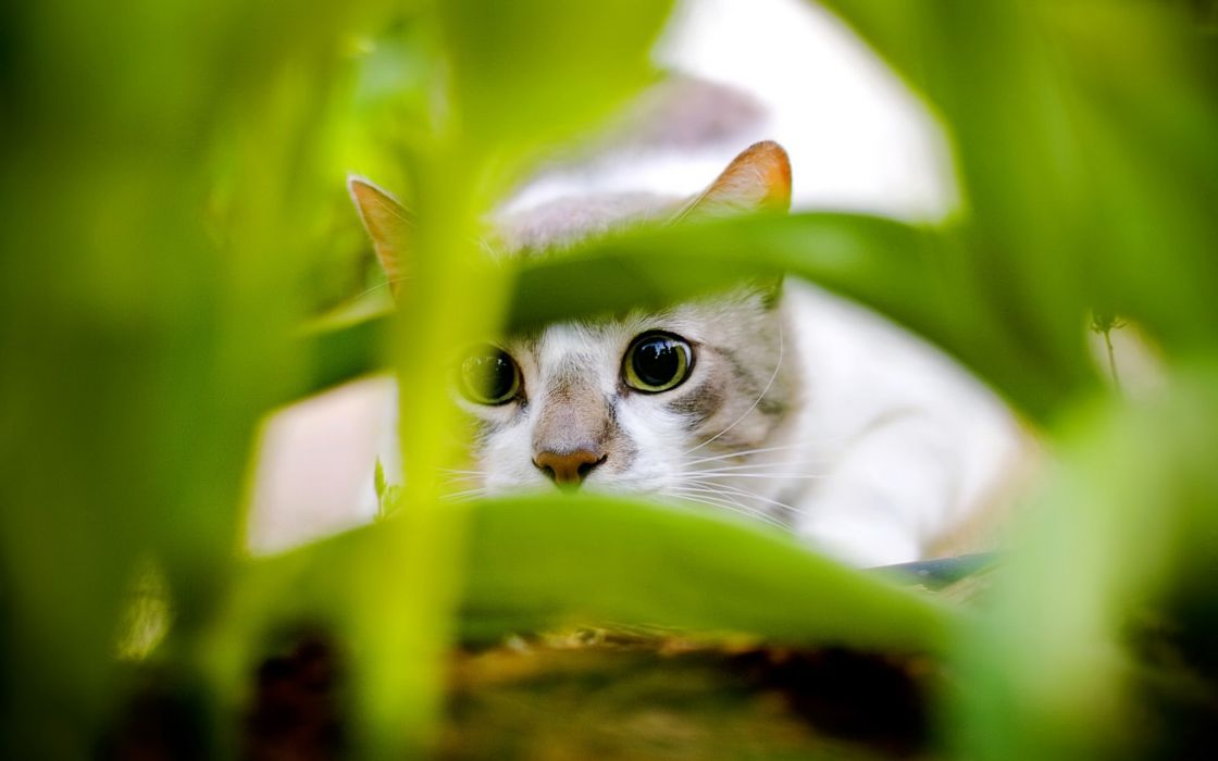 Nature cats animals hunting wallpaper