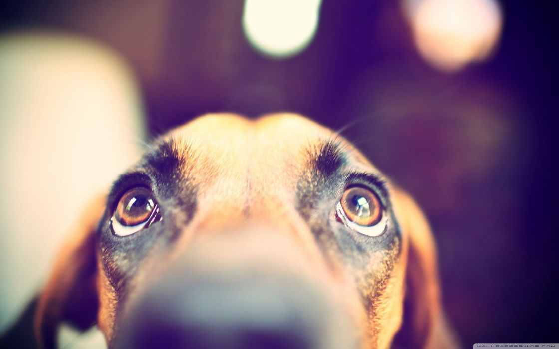 Animals dogs looking up wallpaper