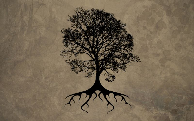 Trees silhouette roots wallpaper