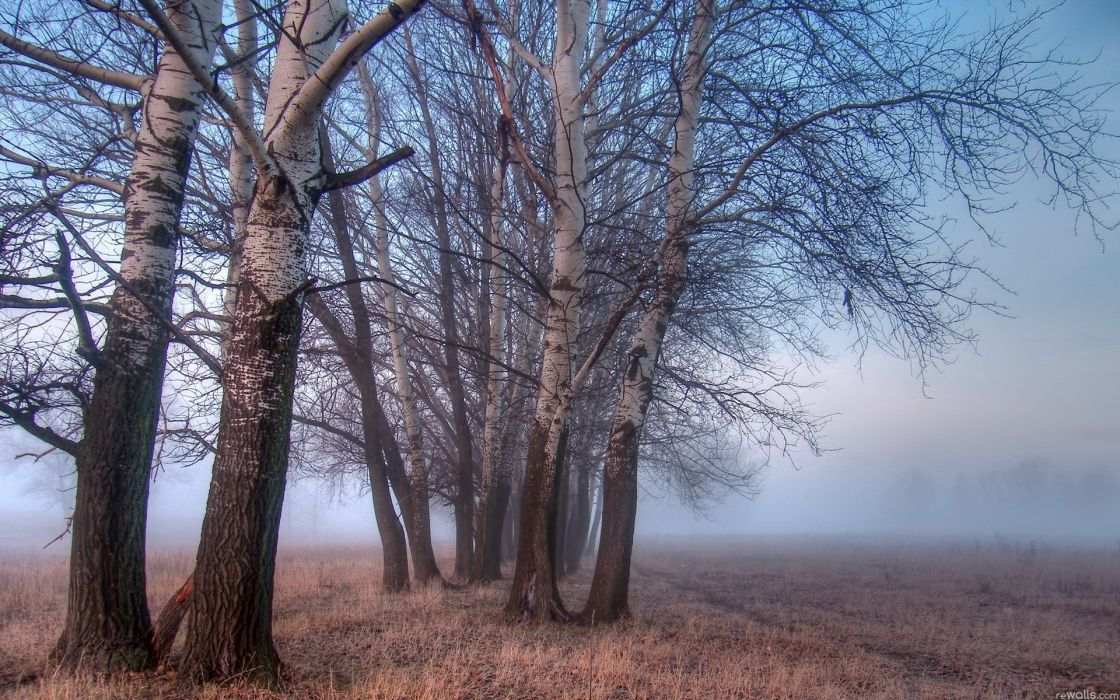 Landscapes nature trees fog watermark wallpaper