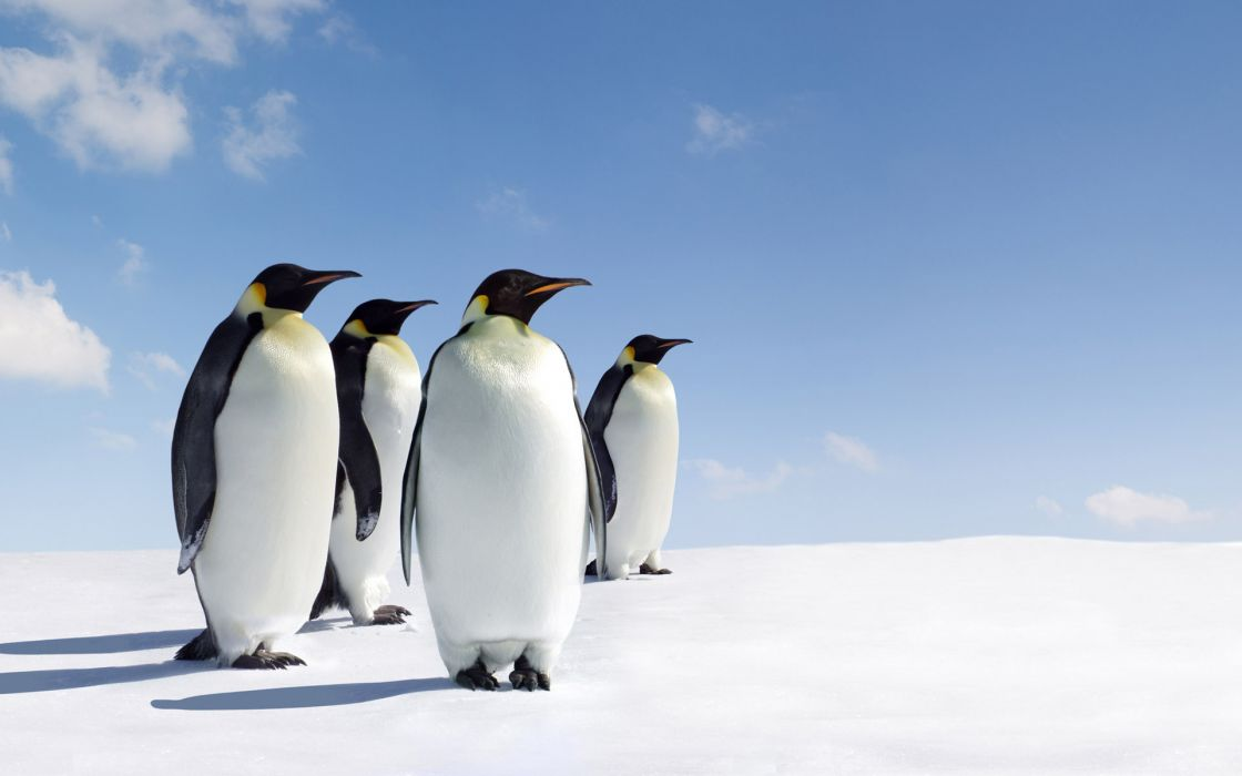 Ice snow penguins wallpaper