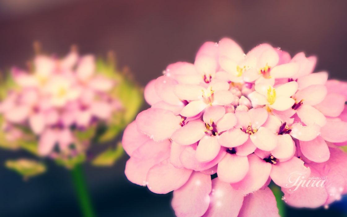 Nature flowers depth of field wallpaper