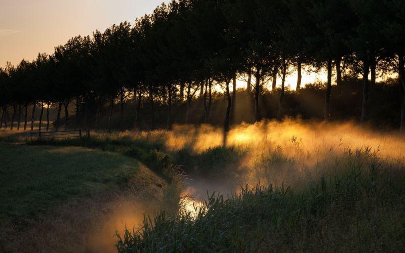 Light sunset landscapes nature sun trees grass fields fog wallpaper
