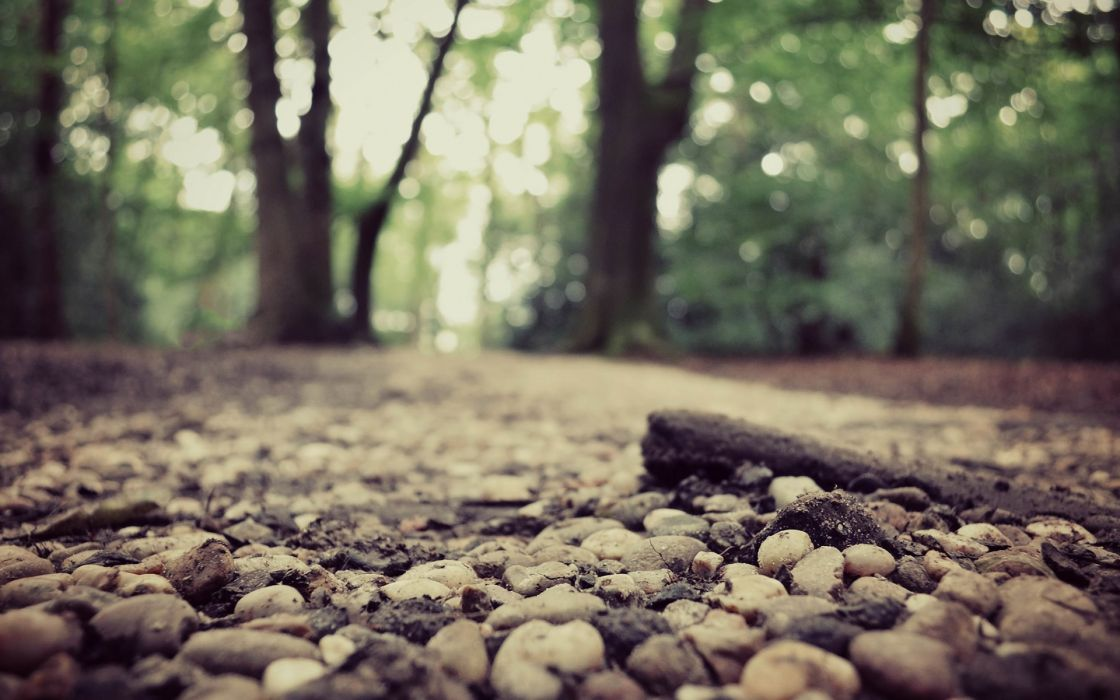 Jungle forest stones forest road wallpaper