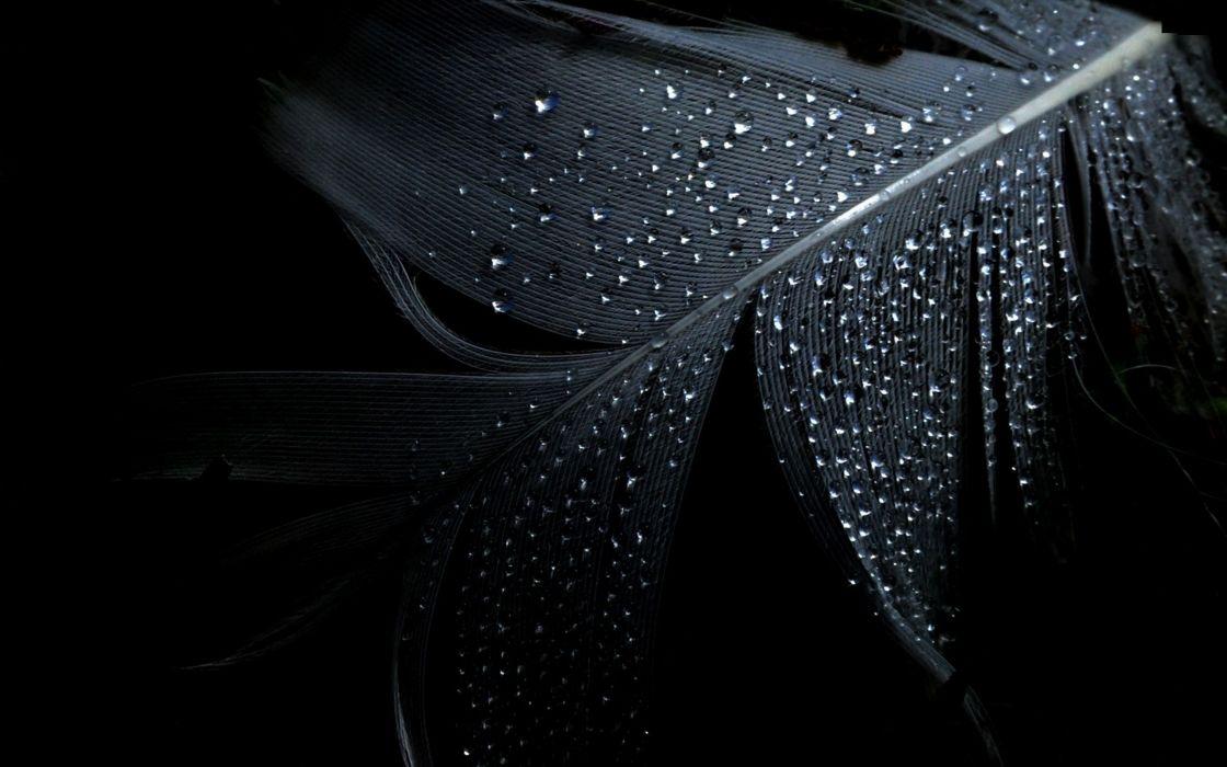 Wet water drops black background wallpaper