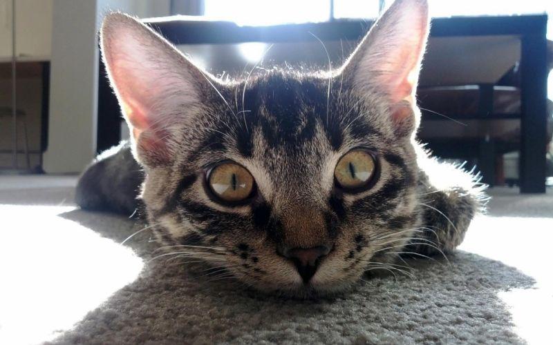 Cats animals curious pets wallpaper