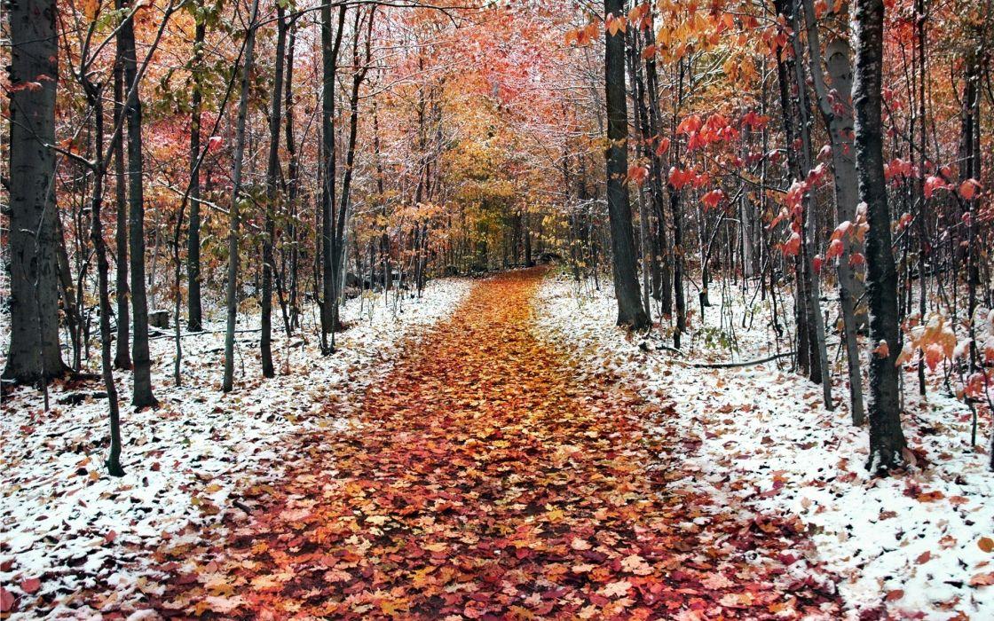 Landscapes winter (season) trees wallpaper