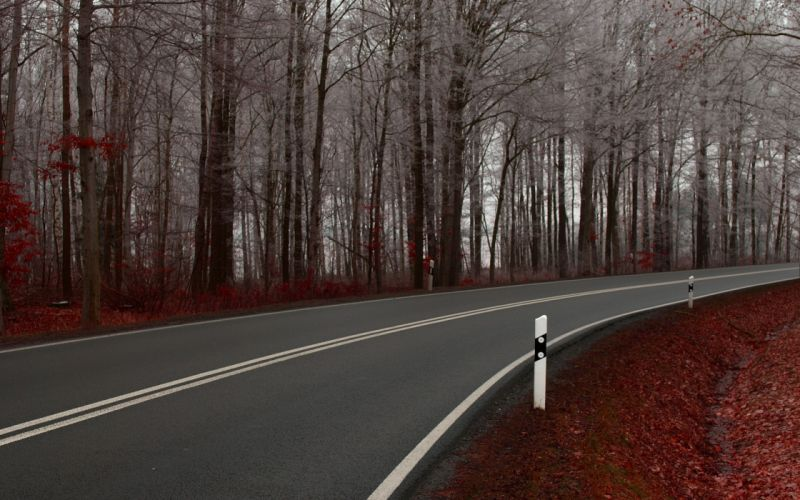 Nature autumn (season) forest roads wallpaper