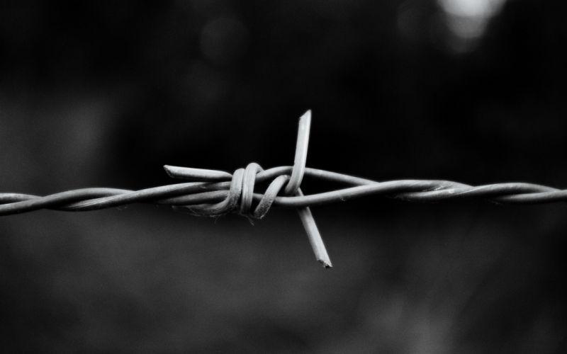 Metal monochrome macro barbed wire wallpaper
