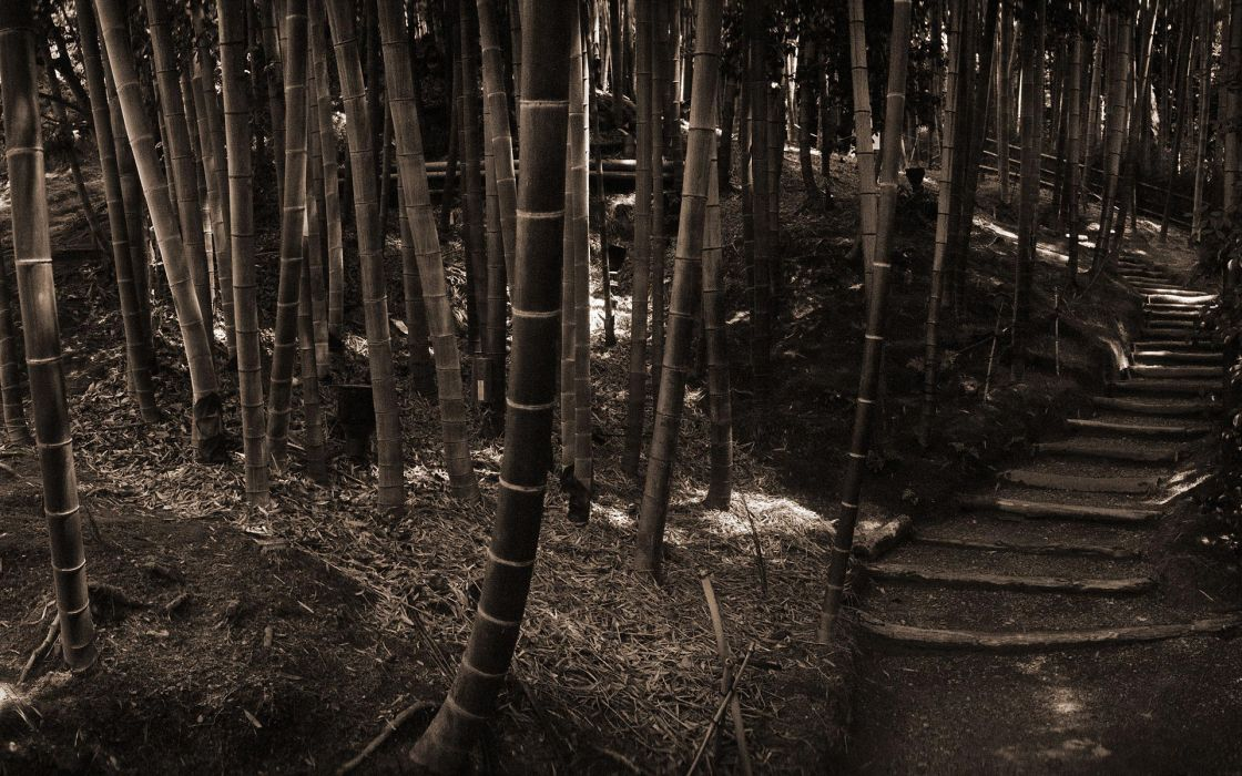 Bamboo asia monochrome wallpaper