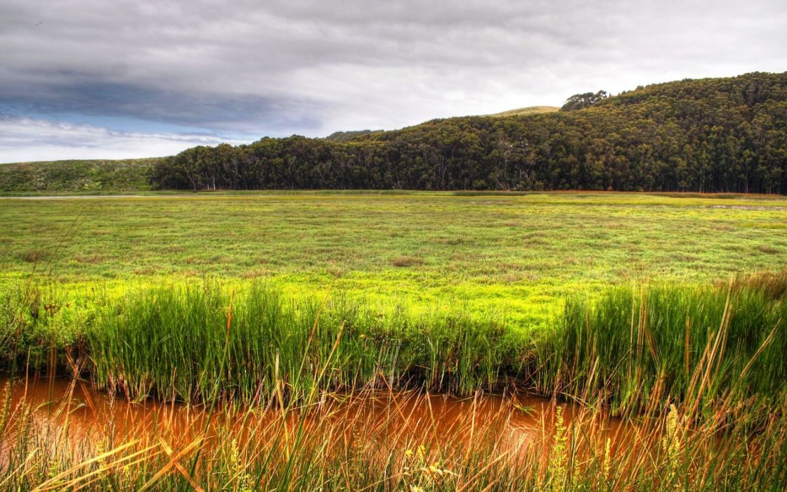 Forest fields meadow streams hdr photography wallpaper