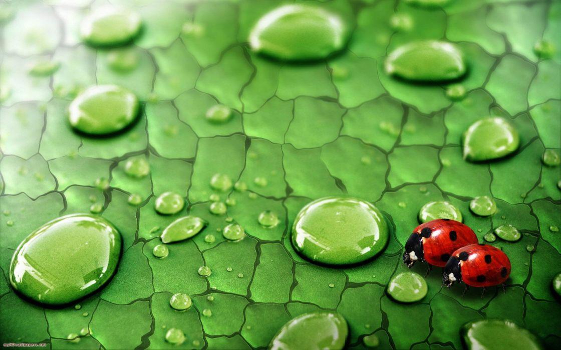 Nature water drops ladybirds wallpaper