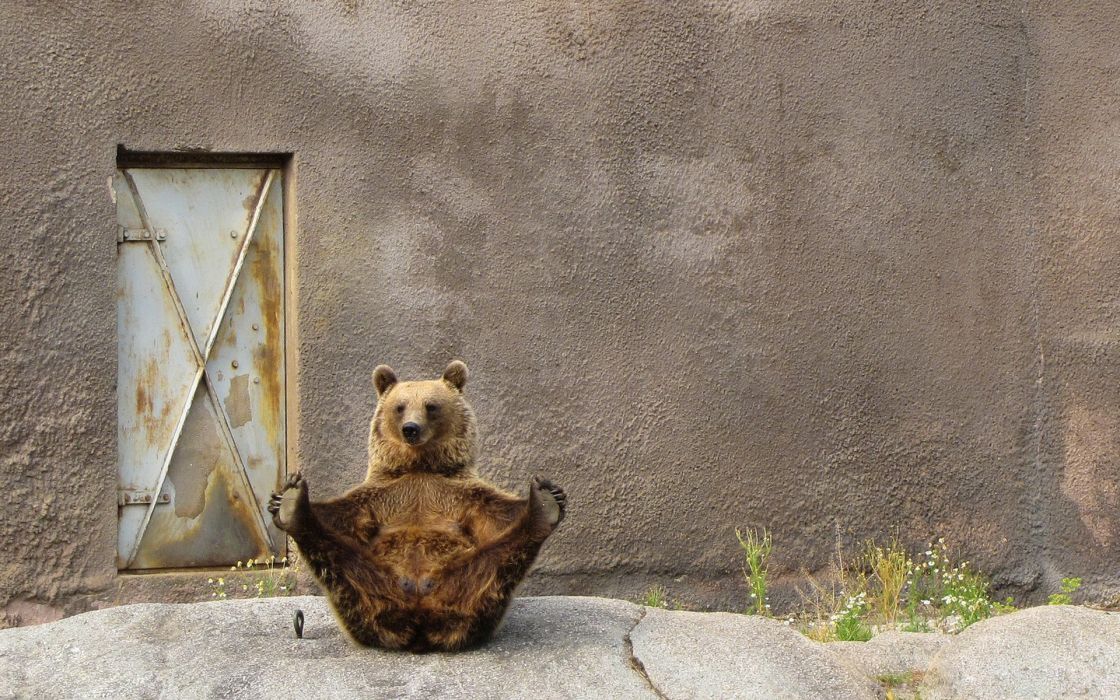 Animals yoga bears wallpaper