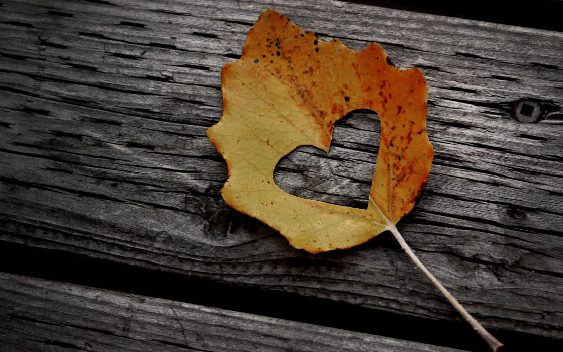 Leaves hearts wallpaper