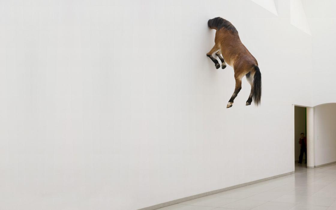 Wall horses artwork wallpaper