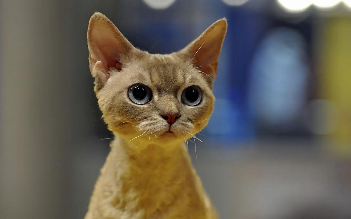 Cats animals funny pets wallpaper