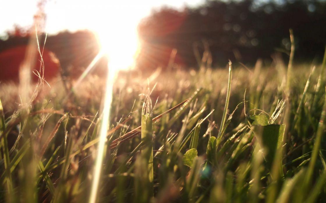 Nature grass lens flare sunlight macro depth of field wallpaper