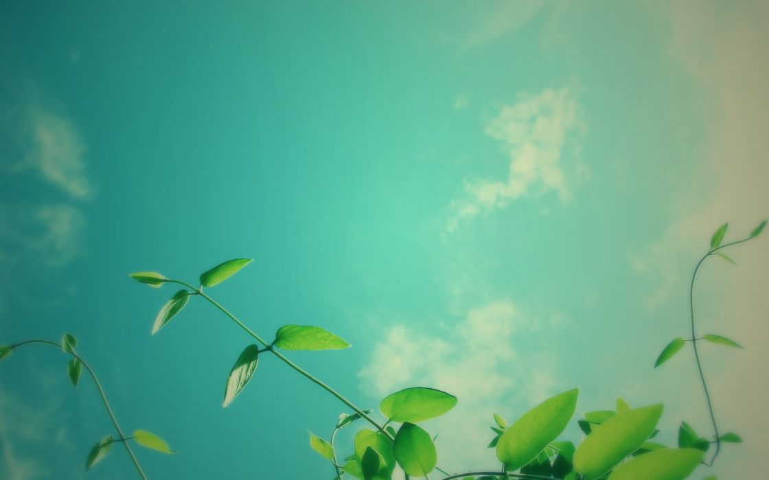 Nature plants skyscapes wallpaper
