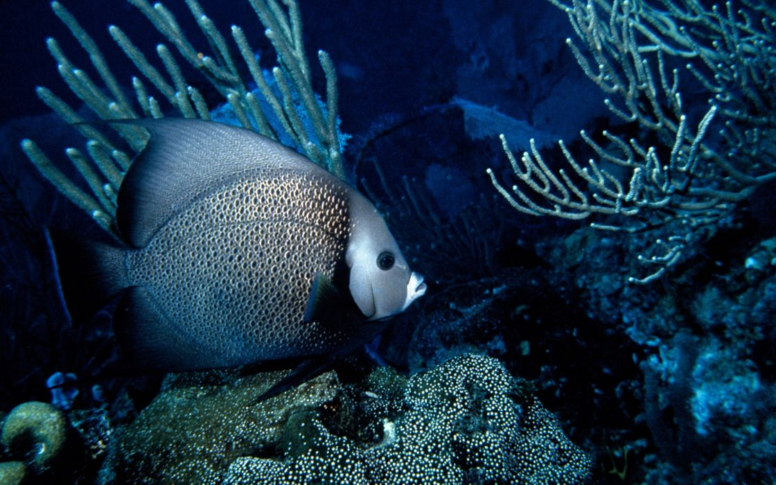 Animals fish wallpaper