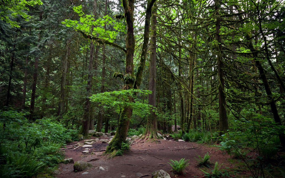 Nature trees forest moss wallpaper