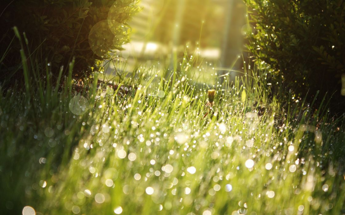 Nature grass sunlight water drops macro depth of field wallpaper