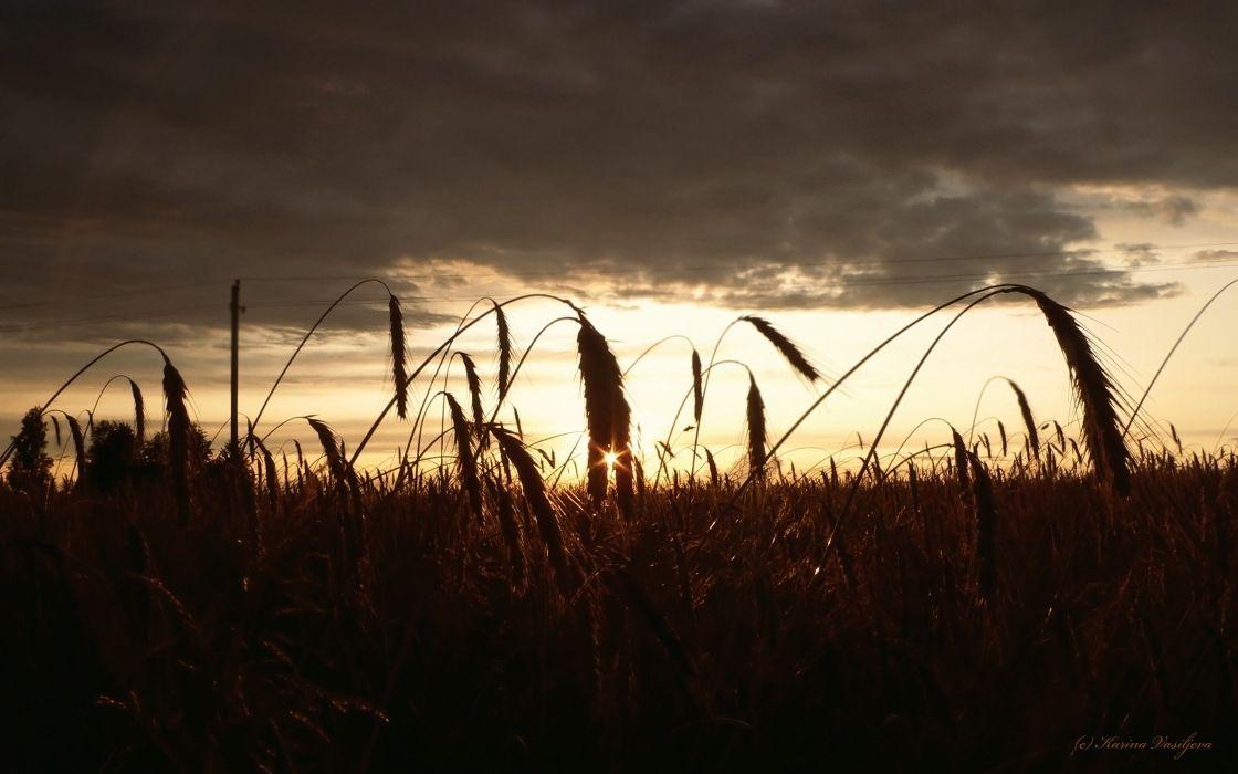 Sunset nature fields wallpaper