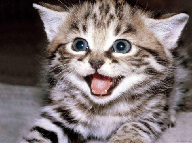 Cats animals kittens faces wallpaper