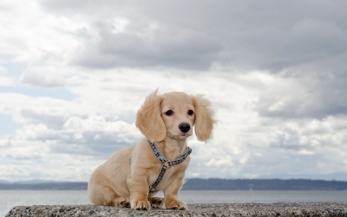 Water clouds animals dogs outdoors pets wallpaper