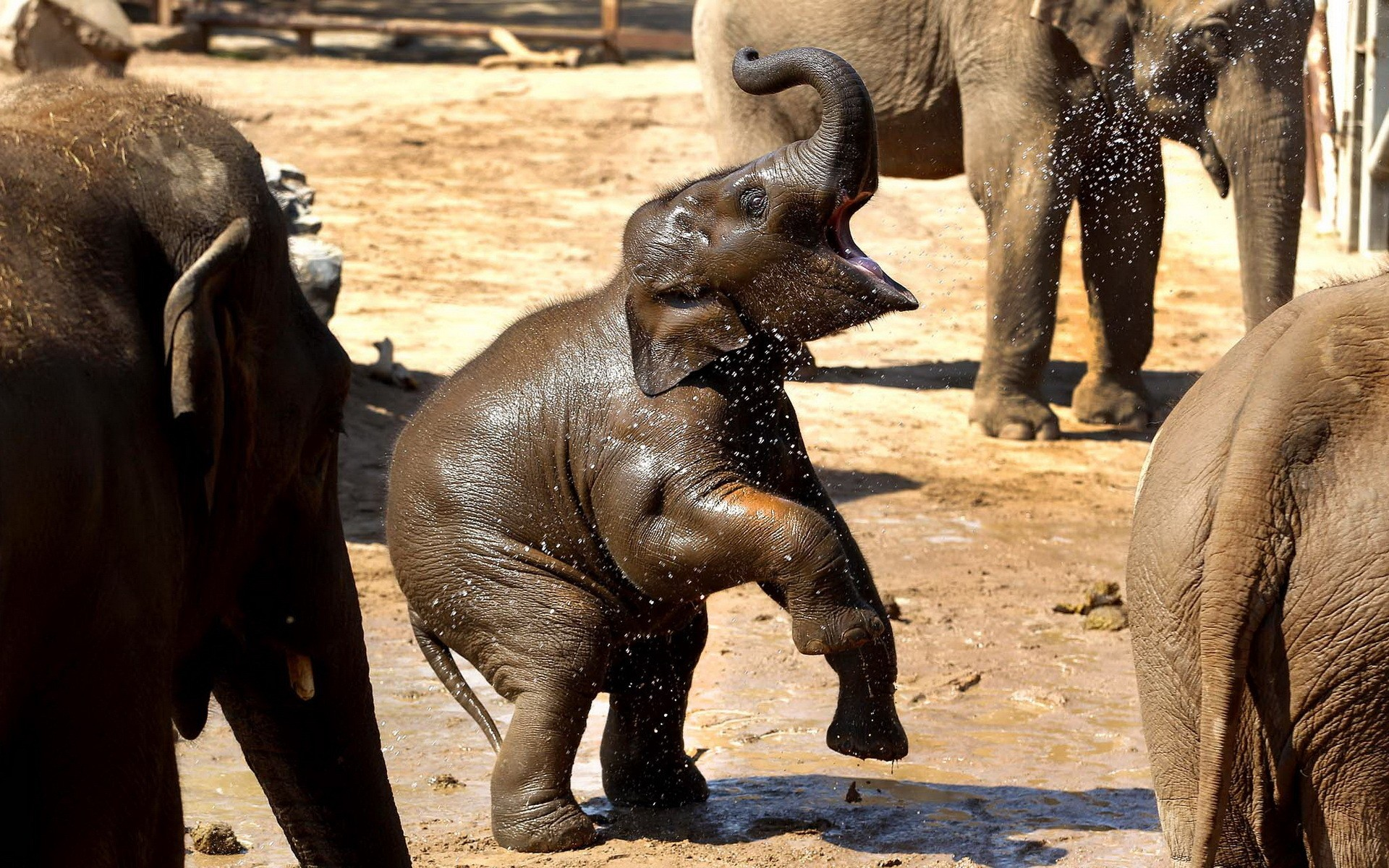 Baby elephants wallpaper - photo#51
