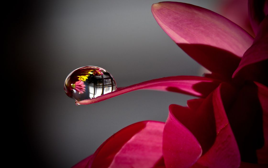Nature flowers water drops macro depth of field dew wallpaper
