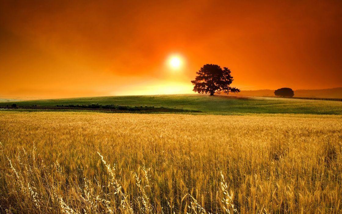 Sunset nature trees autumn (season) fields wheat wallpaper