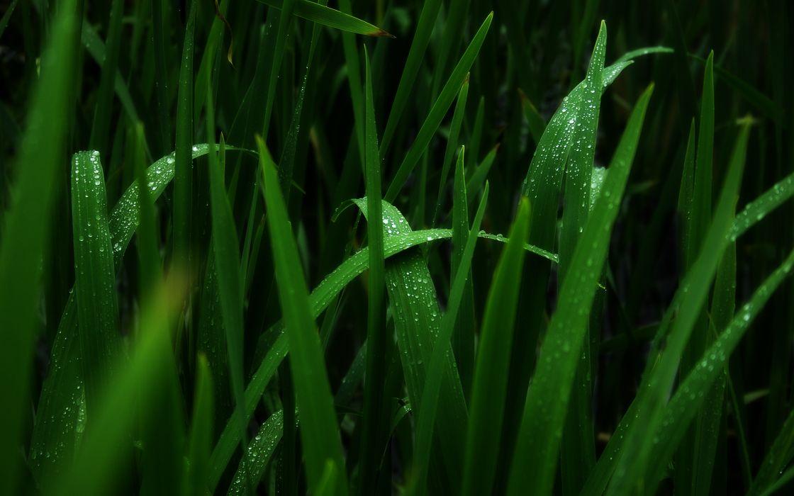 Green nature grass monochrome water drops macro wallpaper