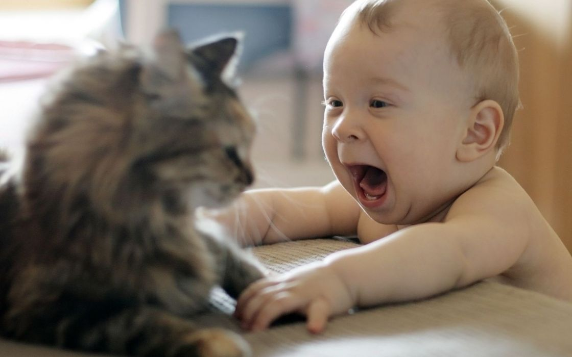 Cats animals kids funny wallpaper