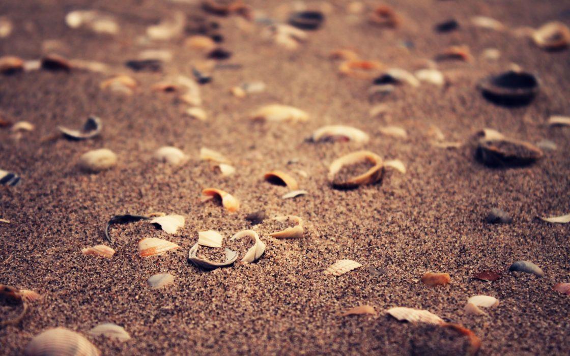 Sand deviantart shells artwork depth of field wallpaper