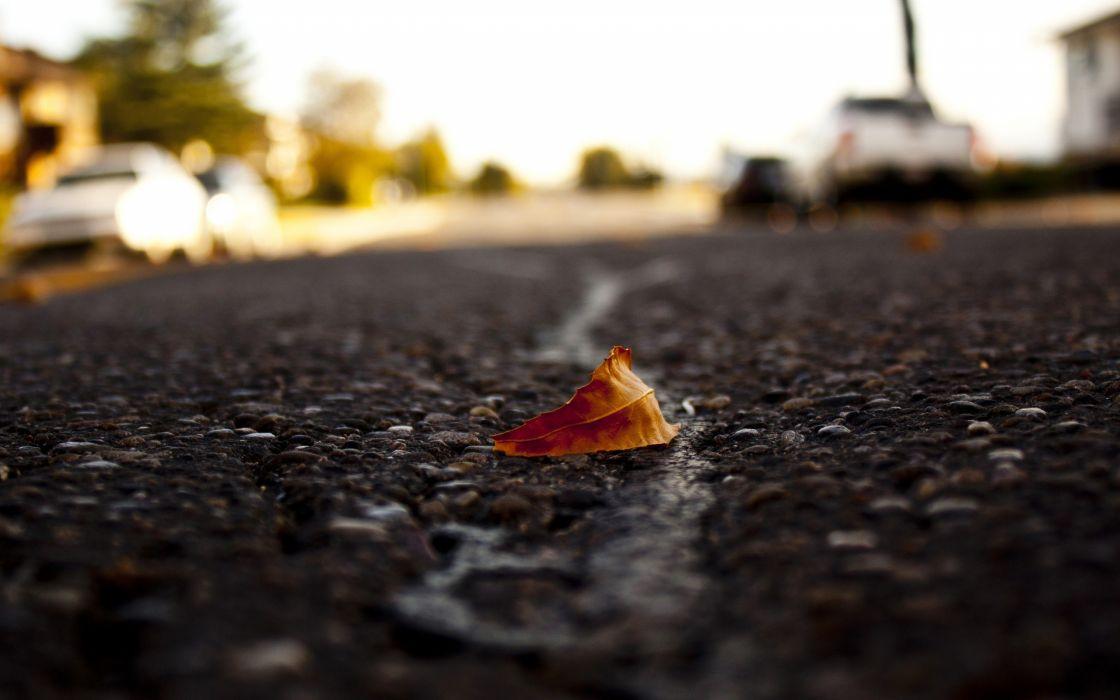 Streets leaves roads macro fallen leaves wallpaper