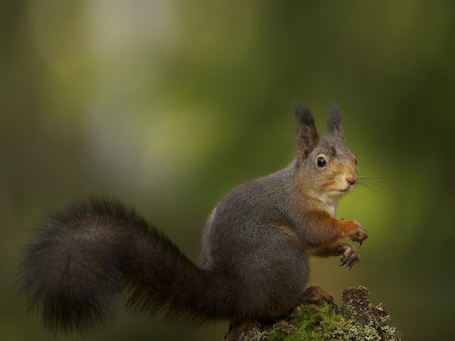 Animals squirrels depth of field wallpaper
