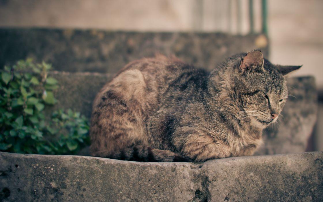 Cats animals feline wallpaper