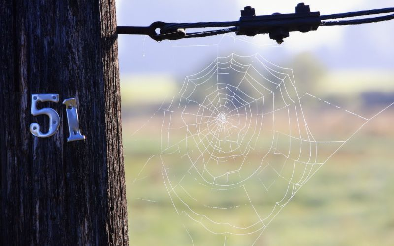 Typography spider webs wallpaper